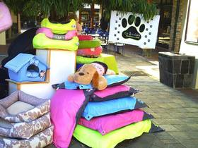 Canine Sunridge Bed Display